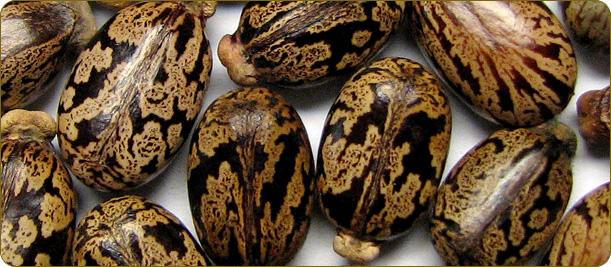Beard Oil Recipe Ingredients Carrier Oils Beard Oil