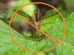 Best Essential Oil for Mosquito Repellent