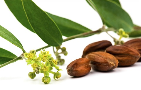 Where To Buy Jojoba Oil – My Favorite Carrier Oil